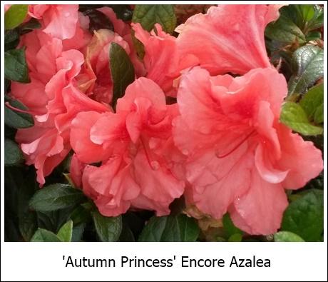 Autumn Princess 10-3-14