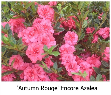 Autumn Rouge 8-21-14