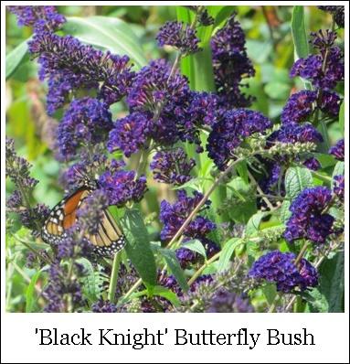 Black Knight 8-14