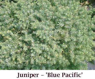 Blue_Pacific_Crop