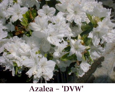 DVW_crop