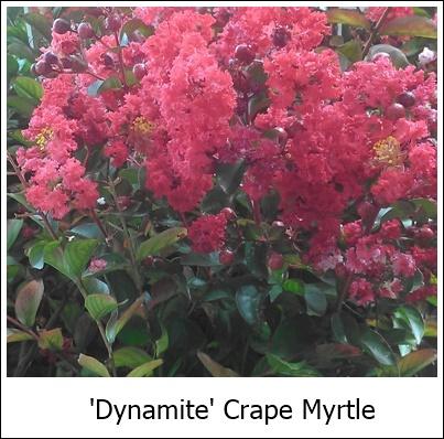 Dynamite 8-21-14