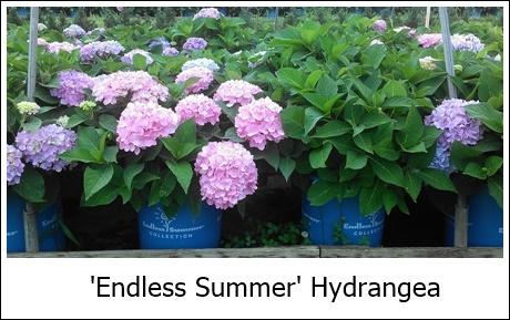 Endless Summer2 8-21-14