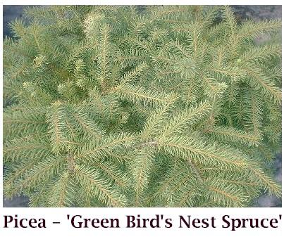 Green_Birds_Nest
