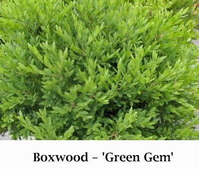 Green_Gem-w