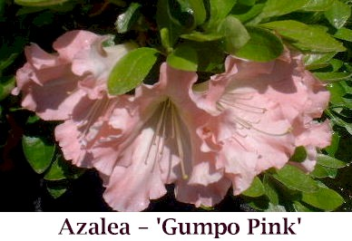 Gumpo_Pink_crop