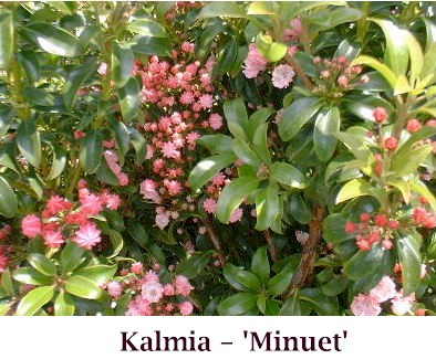 Minuet_crop