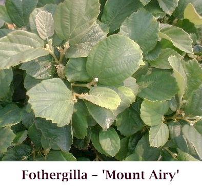 Mt_AiryNEW_crop