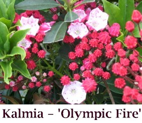 Olympic_Fire08