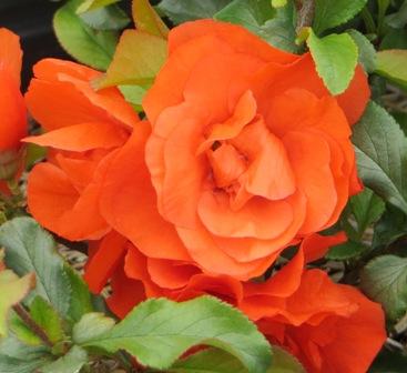 OrangeStorm2