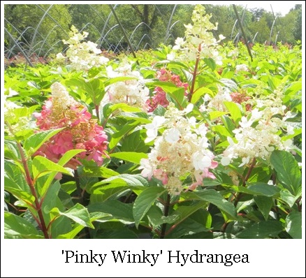 PinkyWinky5 9-24