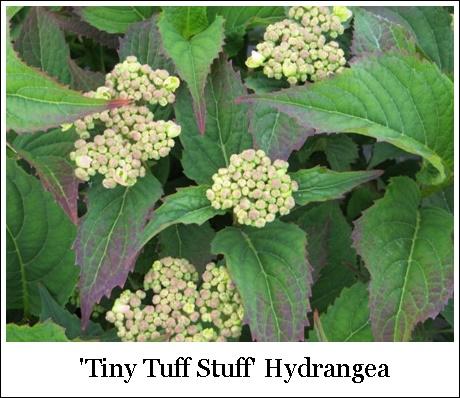 TinyTuffStuff5-28-3